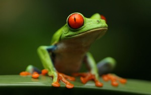Read Aloud eBook the Red-eyed Tree Frog