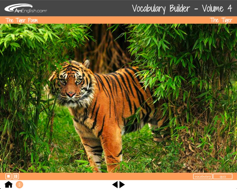 Vocabulary Builder: Animal Tales photographs