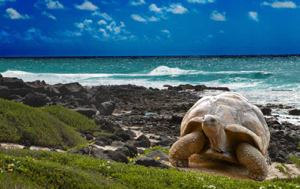Read Aloud eBook the Galápagos Tortoise