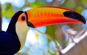 Read Aloud eBook the Toucan