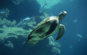 Read Aloud eBook The Green Sea Turtle